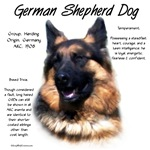 German Shepherd Dog (longhair)