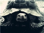Tortoise -mono-
