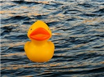 Duckie on the Water