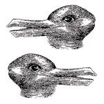 Duck/rabbit illusion