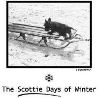 SCOTTIE DAYS of WINTER