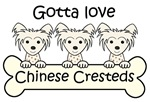 Three Chinese Crested Dogs (White Chinese Crested)