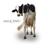 Milk This (captioned) Really funny cow pictures, dairy cows