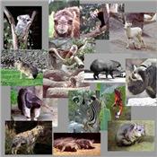 Animal Photo Gifts