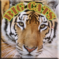 Big Cats