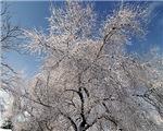 Tree Photo Items