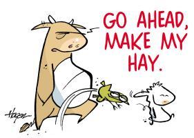 Make Stan's Hay.