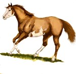 paint horse, sorrel