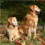 Autumn Golden Retrievers