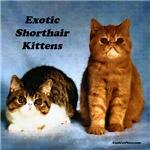Pair of Zot Kittens