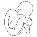 Baby/Pregnancy
