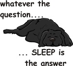 Sleep is the Answer