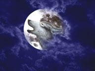 Moon Wolf by Marc Brinkerhoff