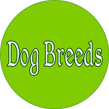 <b>DOG BREEDS</b>