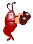Boxing Shrimp
