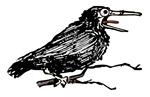 Black Bird Sketch