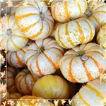 Autumn White Pumpkins