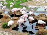 Flamingo City, Photo / Digital Painting