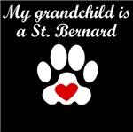 St. Bernard Grandchild