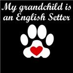 English Setter Grandchild