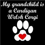 Cardigan Welsh Corgi Grandchild