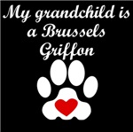Brussels Griffon Grandchild