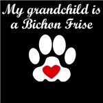 Bichon Frise Grandchild