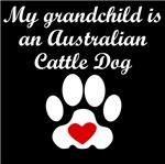Australian Cattle Dog Grandchild