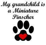 Miniature Pinscher Grandchild