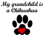Chihuahua Grandchild