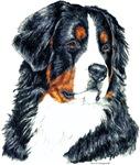 Bernese Mountain Dog Portrait Designs