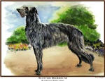 Stunning Scottish Deerhound Dog Products & Gifts