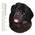 Black Newfoundland