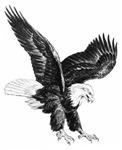 Sketch Of Eagle Landing