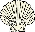 Sea Scallop Shell