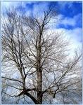 Tree, nature photo