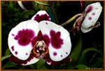 Orchid! Beautiful floral photo!