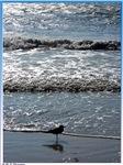 Seagull, ocean, photo,