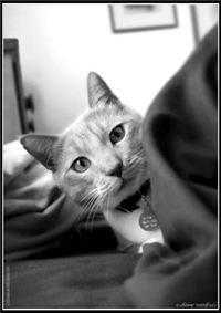 Dianne Woods' Peek Cat