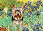 IRISES<br>With Yorkshire Terrier (#17)