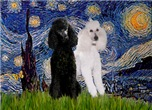 STARRY NIGHT<br> & 2 Std Poodles