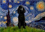 STARRY NIGHT<br>& black Standard Poodle #1
