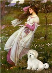 WINDFLOWERS<br>& Coton de Tulear