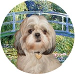 Shih Tzu #9Y<br>in Lily Pond Bridge
