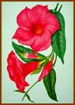 Morning Glory Vintage Flower Poster Print