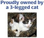 3-Legged Cat