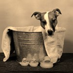 JRT in Tub-Retro