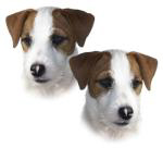 JRT Double Head Shot