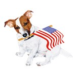 Patriotic Jack Russell