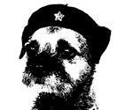 Border Terrier a la Che!